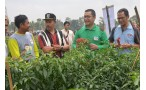 Cap Panah Merah Launches Variety of Pepper That Tolerants to Drought