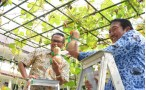 Harvesting LABUMADU F1 with Director General of Horticulture