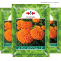 CITRA ORANGE F1
