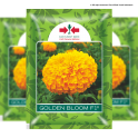 GOLDEN BLOOM F1